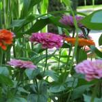 spoontomatoes garden aug2010 084