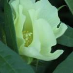 spoontomatoes garden aug2010 087