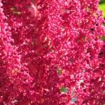 spoontomatoes garden aug2010 097