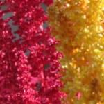 spoontomatoes garden aug2010 099