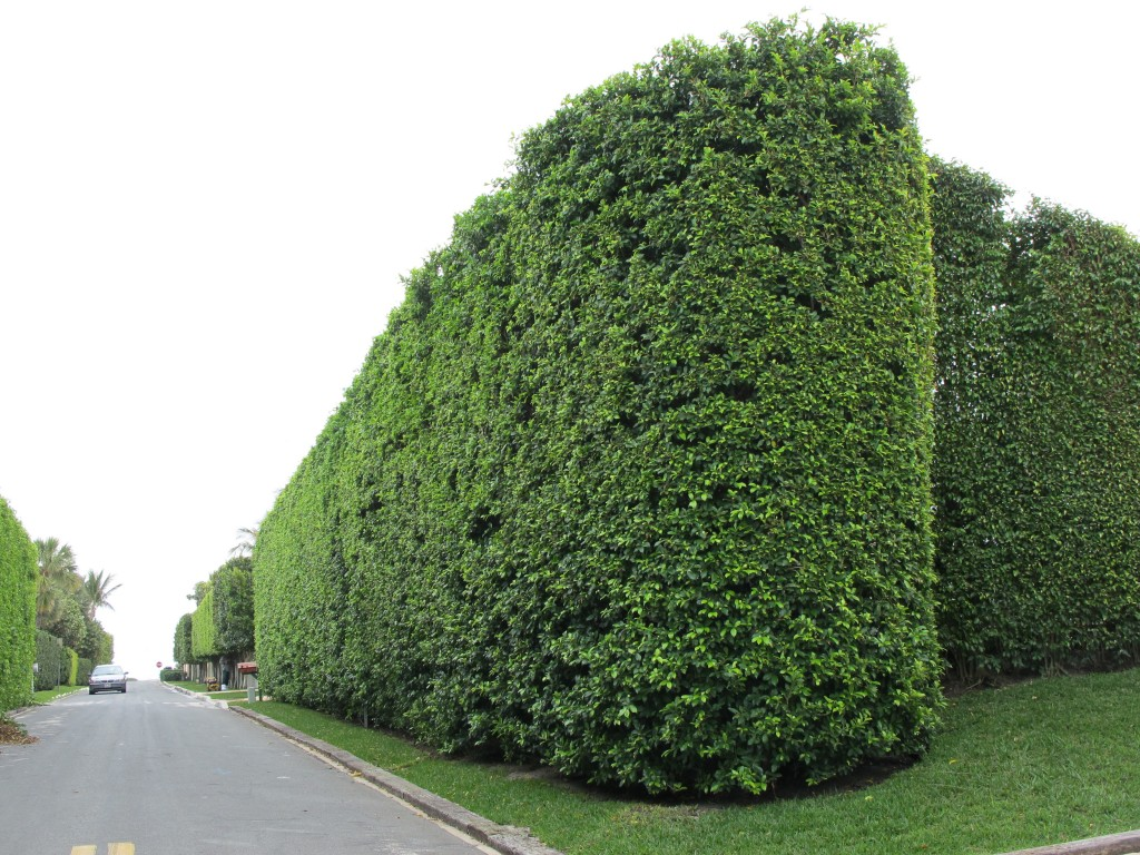 Typical tower fortress hedge, Palm Beach