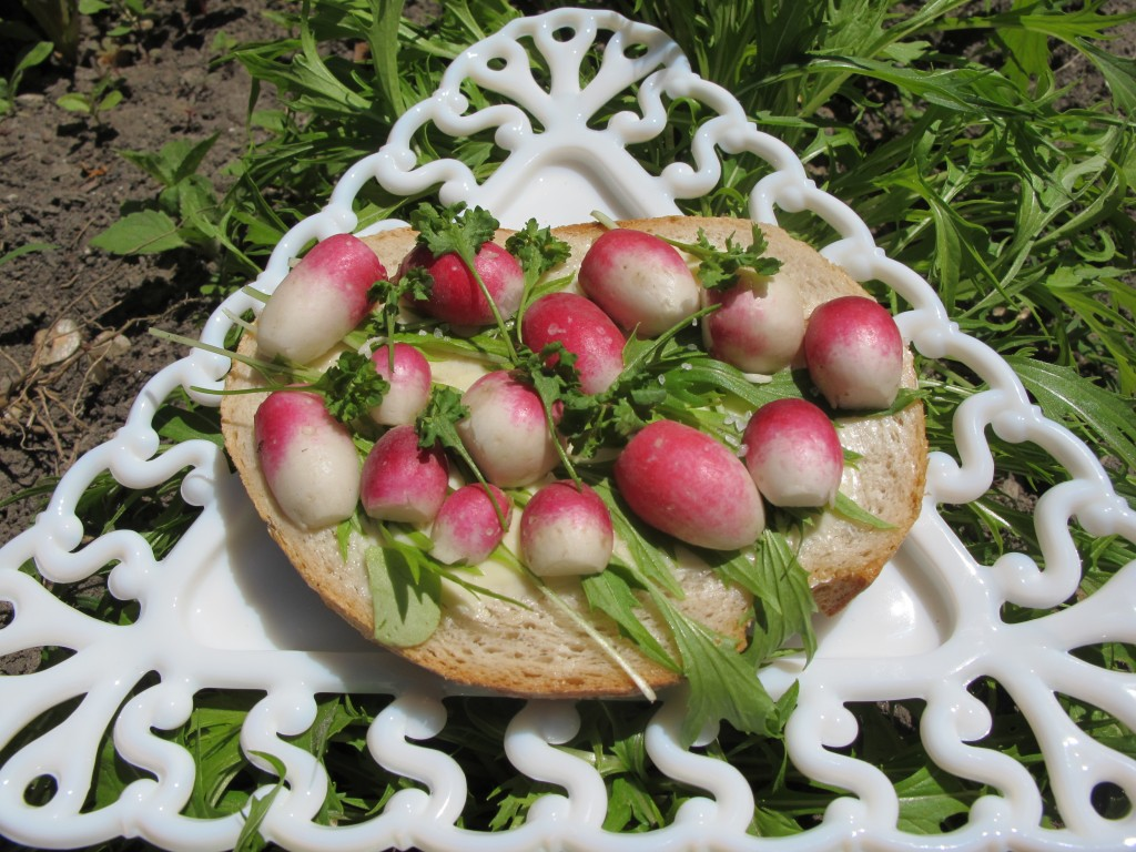 Curly cress, mizuna and radish sandwich