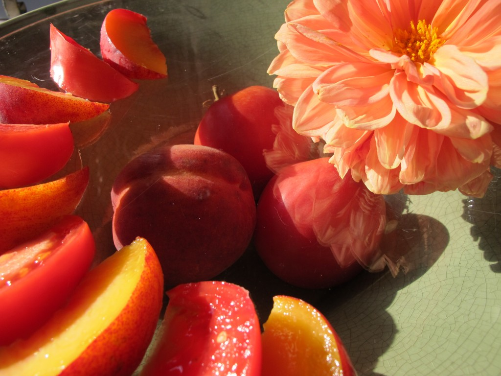"Peaches and rooftop ""Big Red Peach"" tomato. Dahlia from ground level garden at 124 Merton Street"